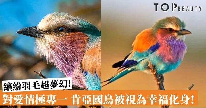 被譽為全球最美!肯亞國鳥夢幻彩虹羽毛下 有著一顆對愛情堅貞不渝的心 !